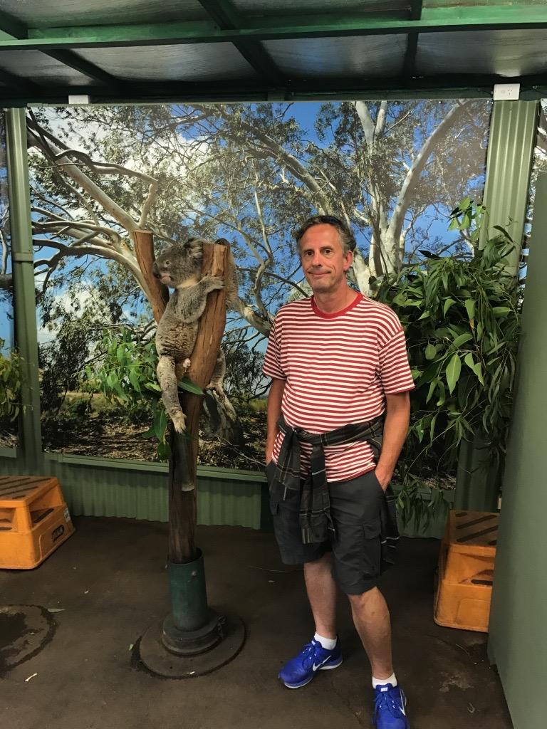 koala bear; Doug McNamee; Australia