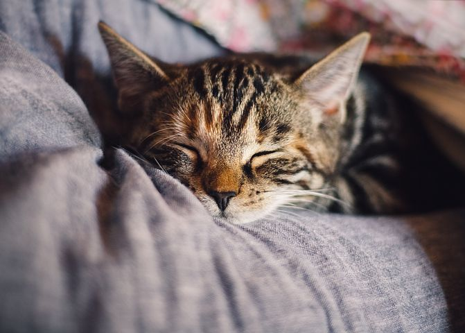 sleeping cat, Pixabay